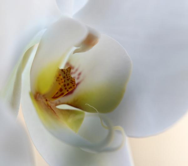 * Flors humanes  5
