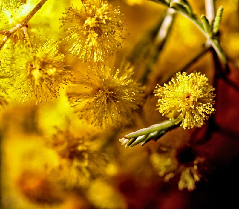 * Flors inefables 5