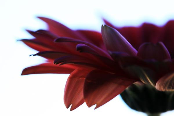 * Flors humanes 8