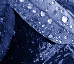 * Mirant la pluja al terra 7