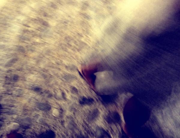 * Cuca de llum  - firefly