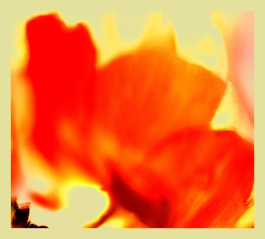 * Pètals d'anemona