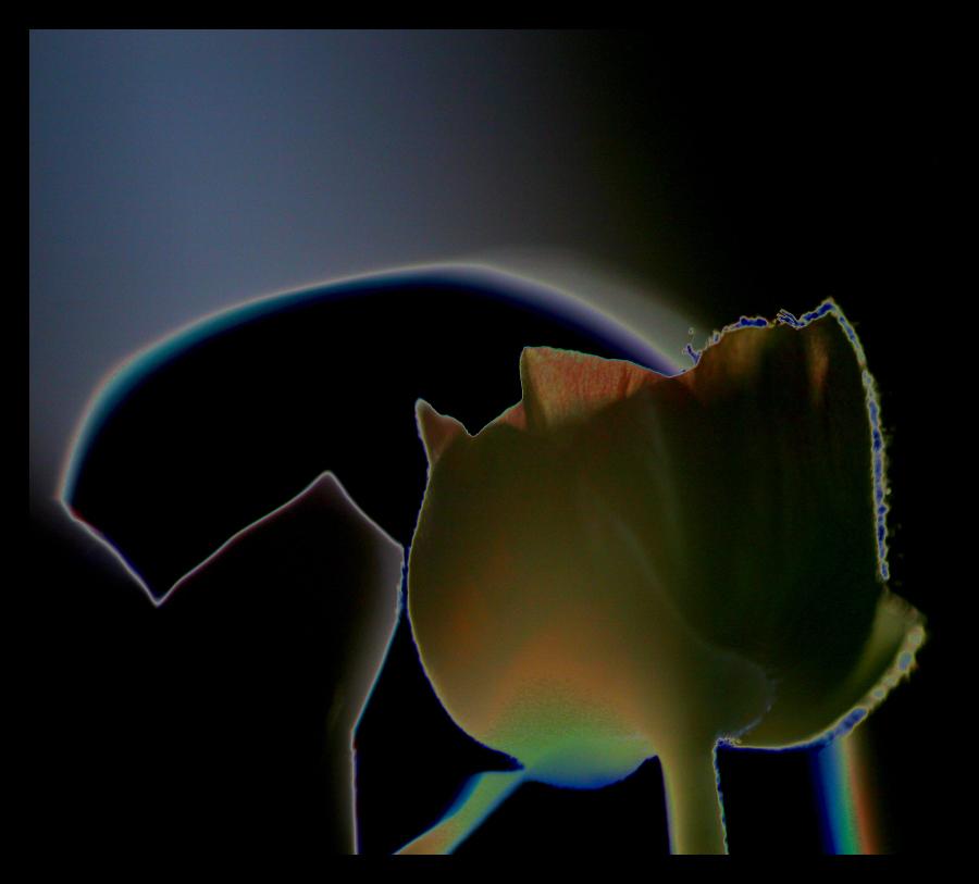* Solaritzar una flor