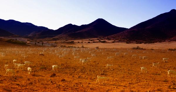 * Cabres al desert