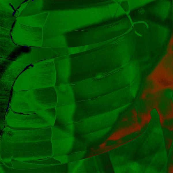 * Fulles verdes i un toc vermell