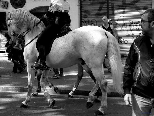 * Festa ciutadana. Sant Jordi 2016. 2