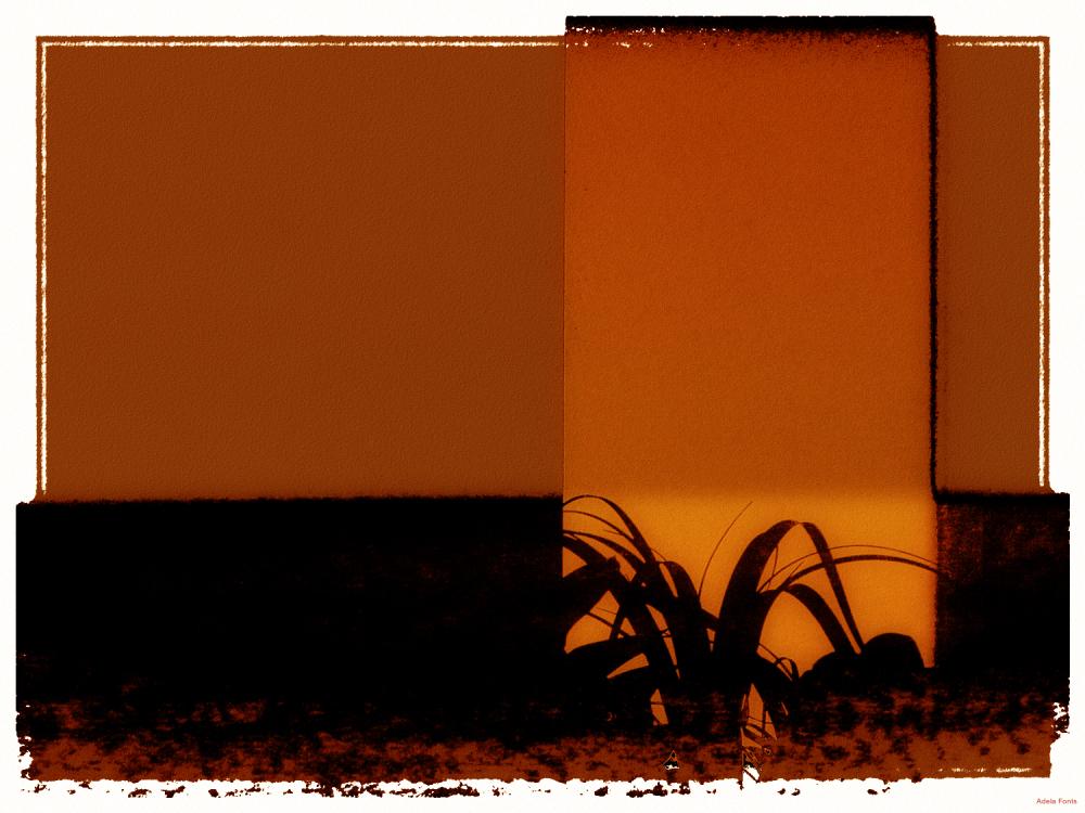 * Una planta a la finestra