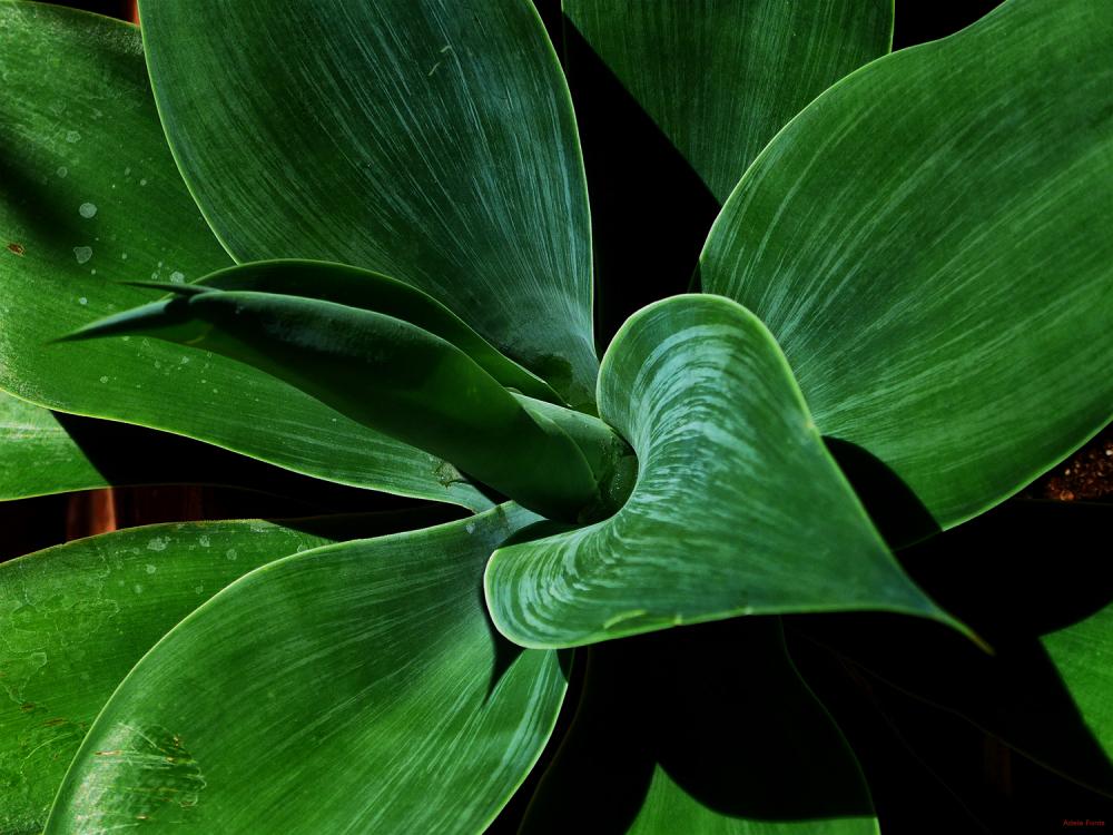 * Una planta especial