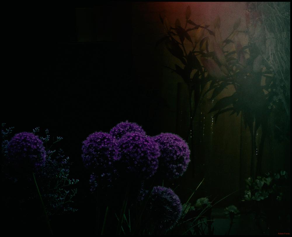 * Espai fosc i flors