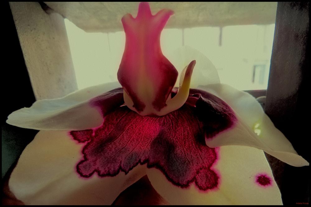 * Una orquídea a la finestra