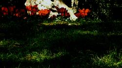 * Flors d'hivern... ya no hi son...