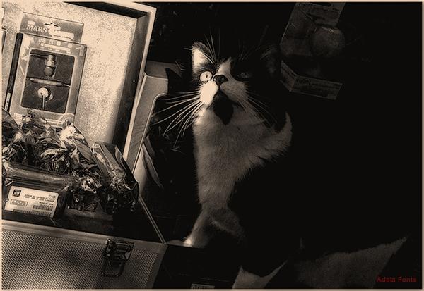 * Un gat amant de la informàtica