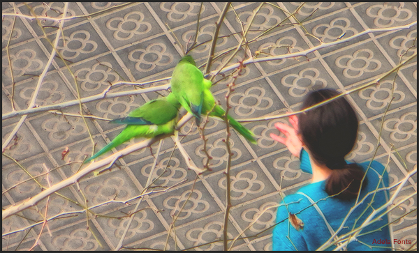 * Ocells lliures
