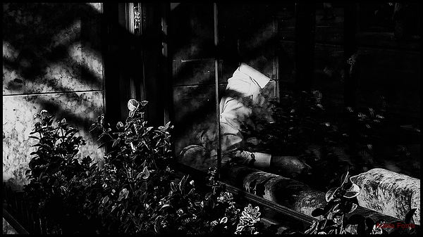 * Llum i ombres