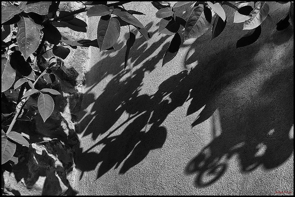 * Les ombres que pinta el sol