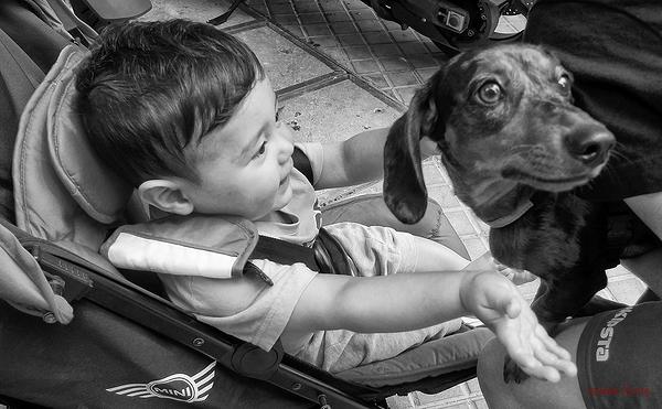 * El nen i el cadell