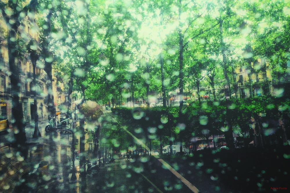 * Vegetació urbana i pluja
