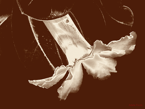* La perfecció d'una petita flor