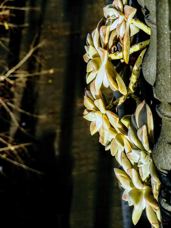 * Visió urbana amb planta crassa