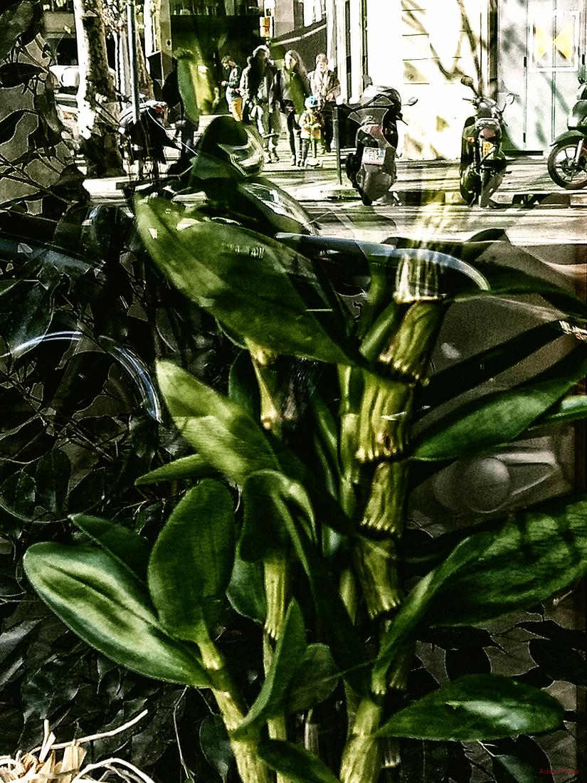 * Vegetació darrera el vidre