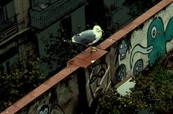 * El terrat i la gavina