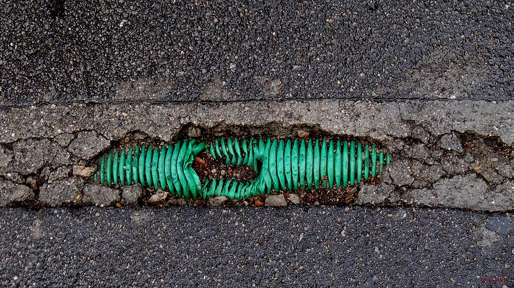 * Un cuc a l'asfalt