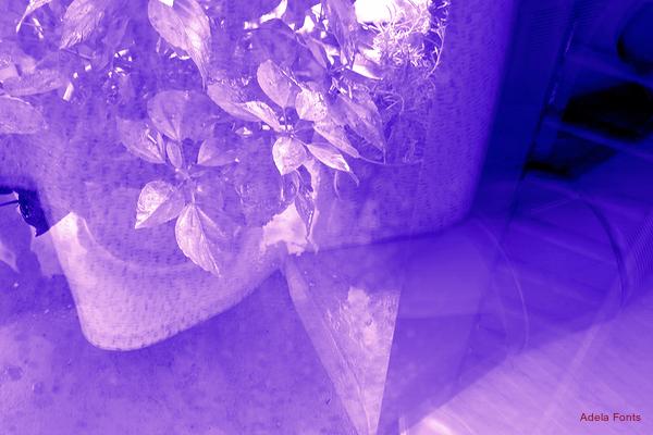 * Reflex floral