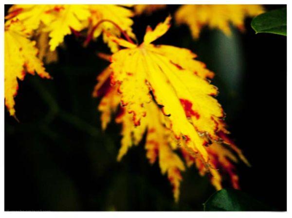 Amarillos 5
