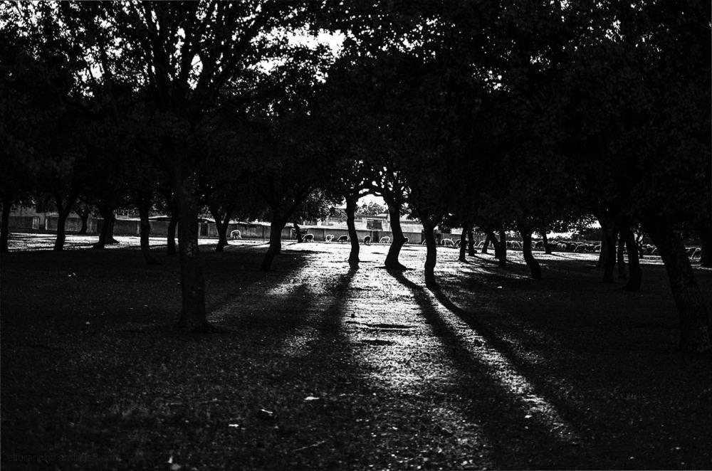 Winter light 3