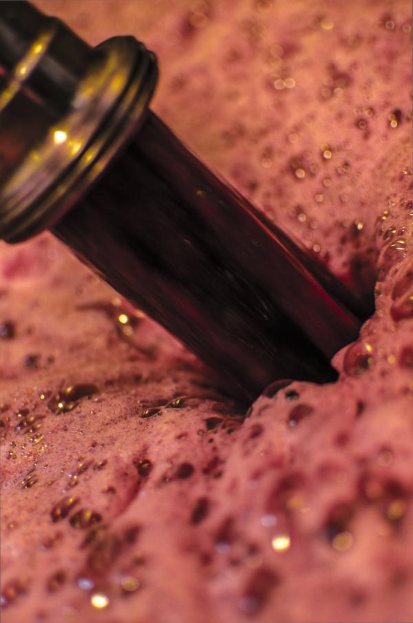 Grape harvest (Vendimia) 1