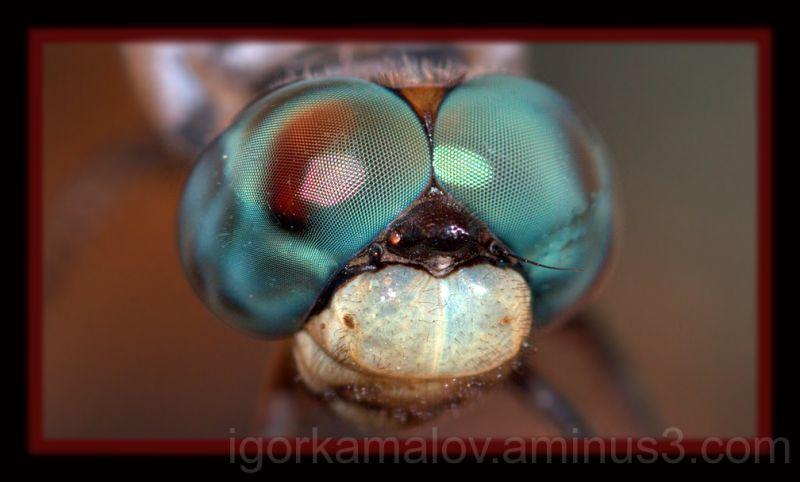 Dragonfly's Eyes
