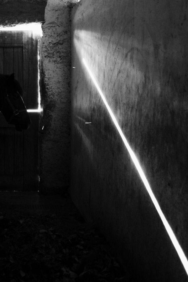 light, horse