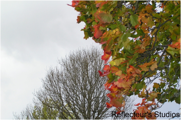 autumn colours scandinavia reflecteurs sweden