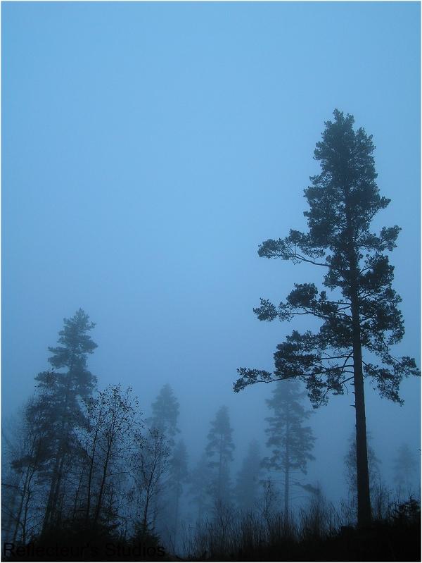 autumn fog mist värmland sweden reflecteurs