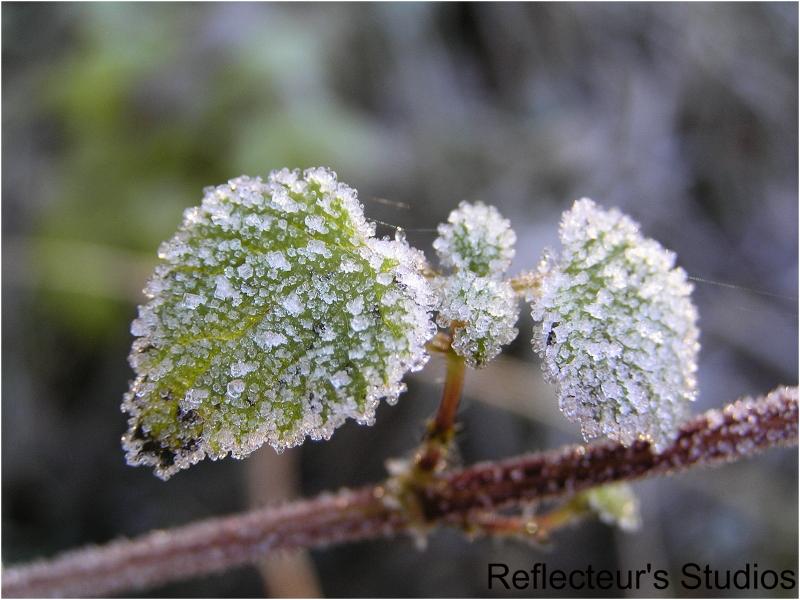 reflecteur frozen beauty autumn värmland