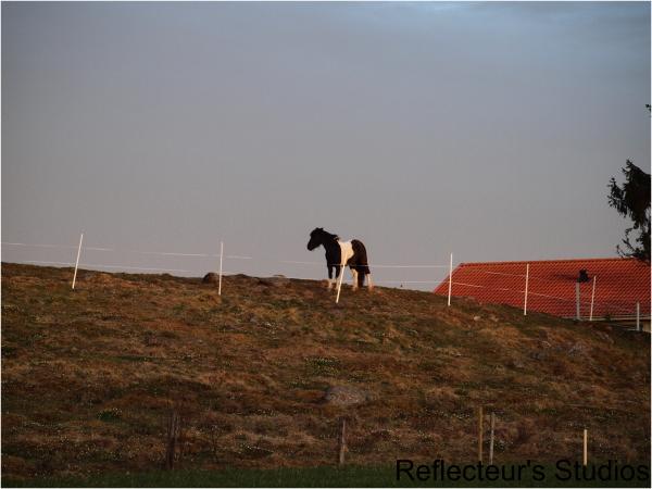 horse varmland sweden sverige reflecteurs studios