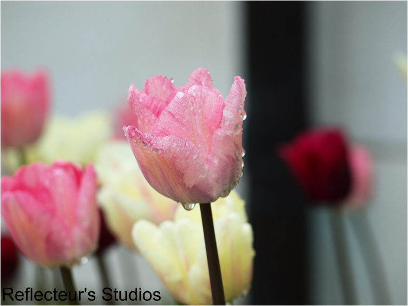 bommersvik sweden sverige tulip reflecteurs studio