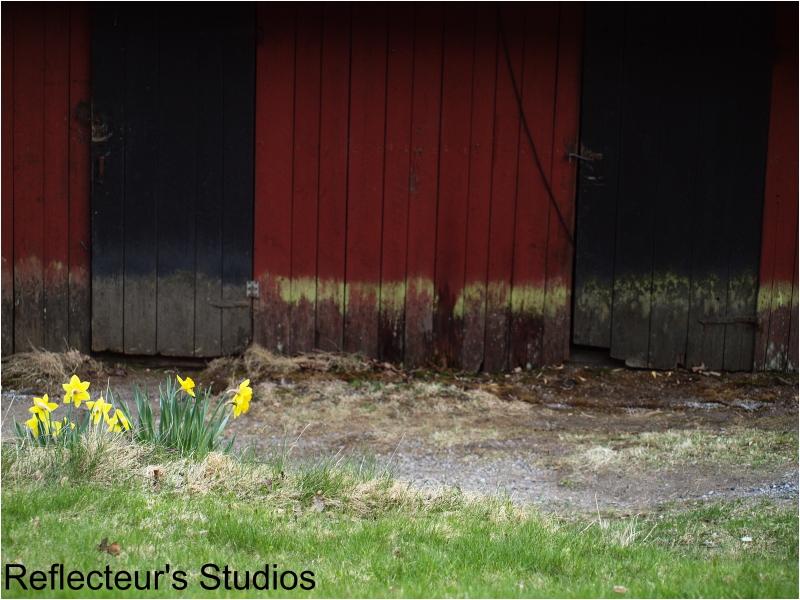 Yellow,black red door sweden reflecteurs studios