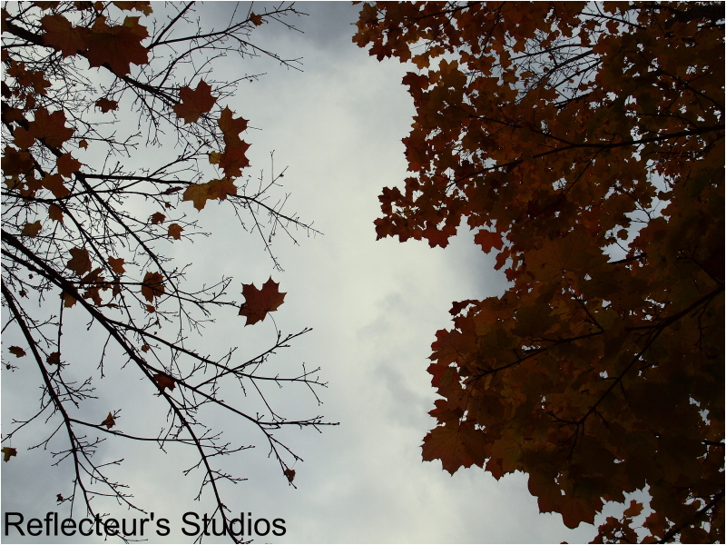 Autumn's sky and colours