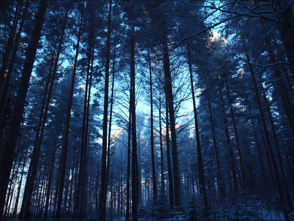 Morning walk värmland arvika sweden reflecteurs