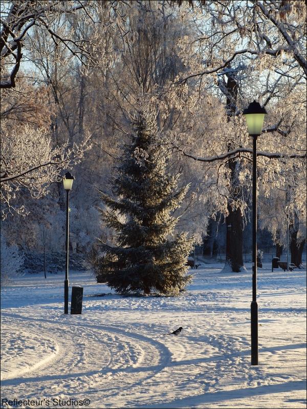 Merry Christmas arvika sweden reflecteurs