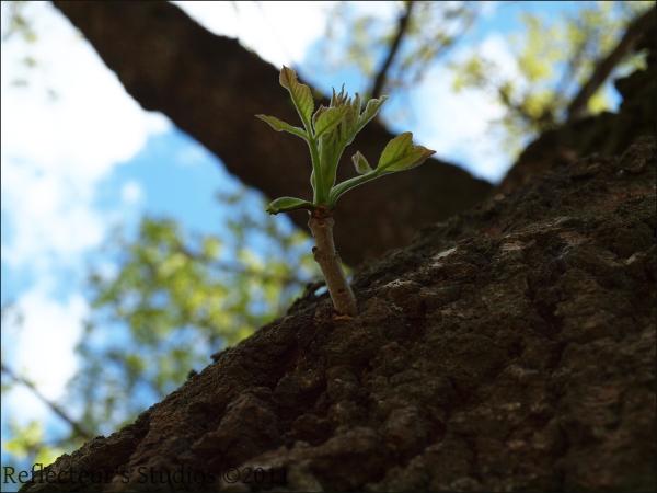 new life green tree sweden scandinavia