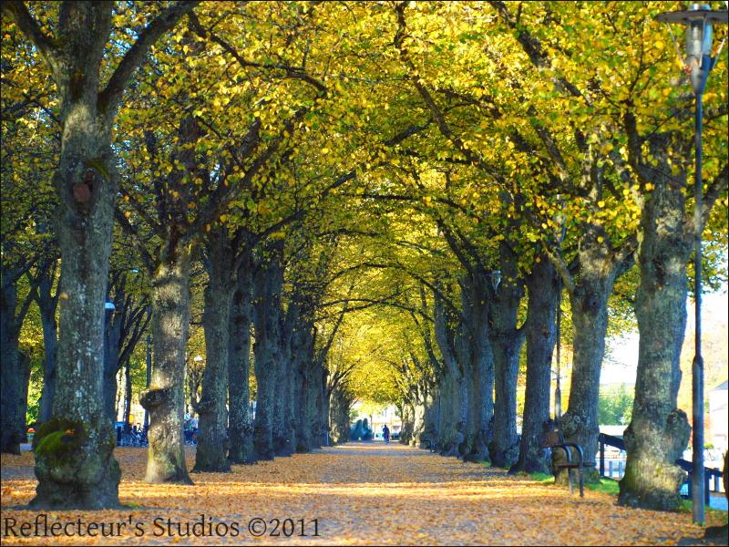 path autumn sweden kronoberg vaxjo reflecteurs stu