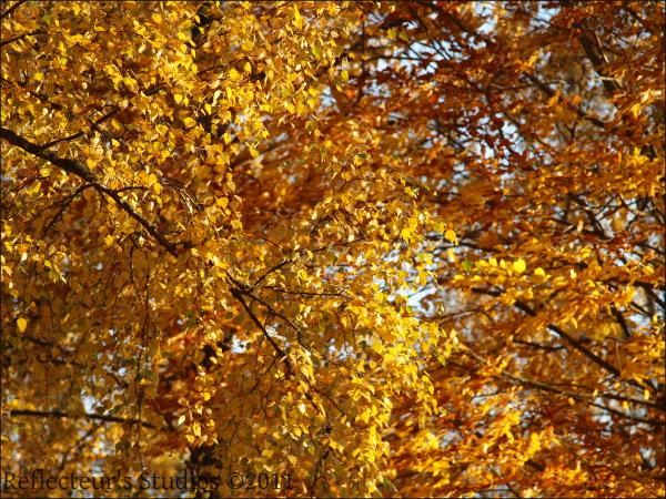 fall autumn colours steps reflecteurs studios
