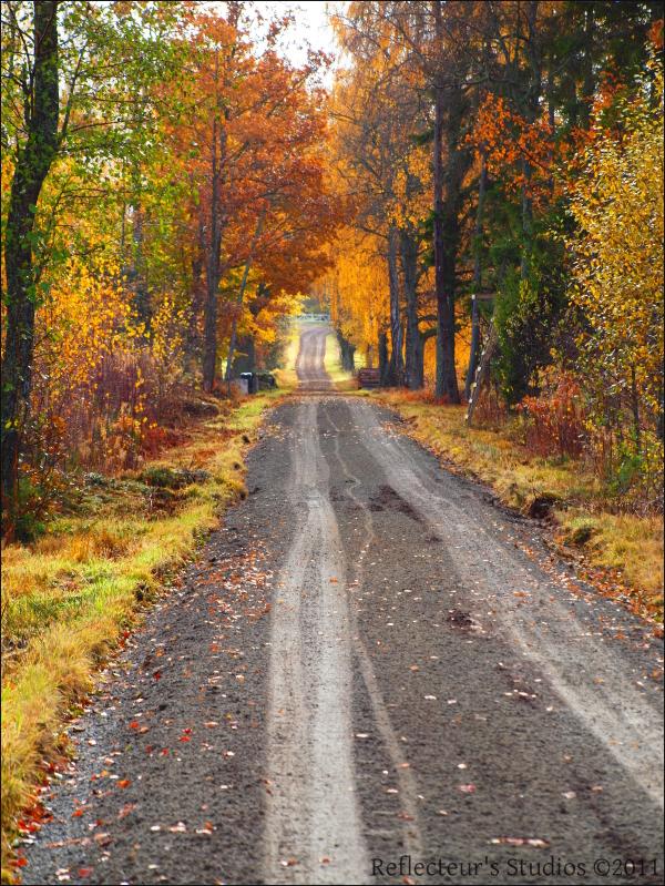 autumn way colours nature reflecteurs studios