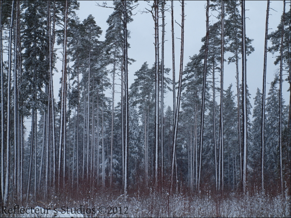 winter snow forest vaxjo sweden reflecteurs studio