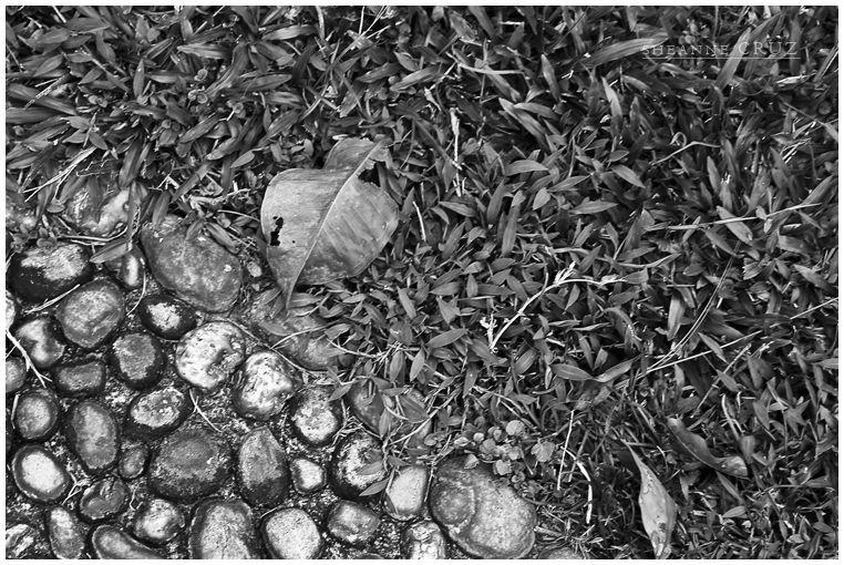 isolated leaf