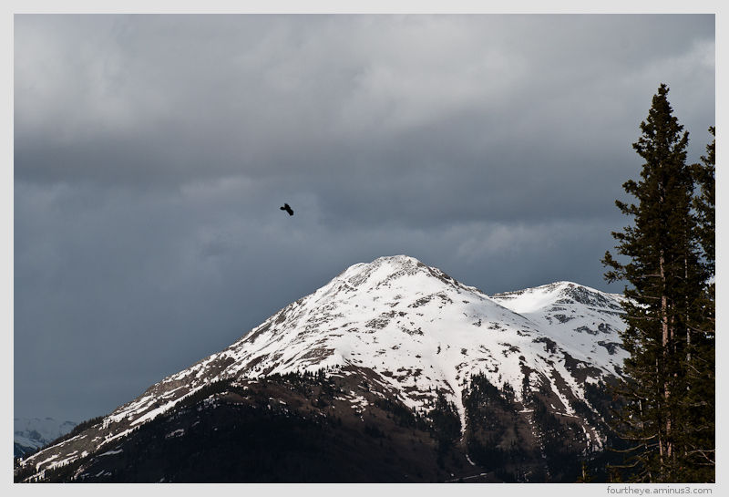 snow capped mountain with bird