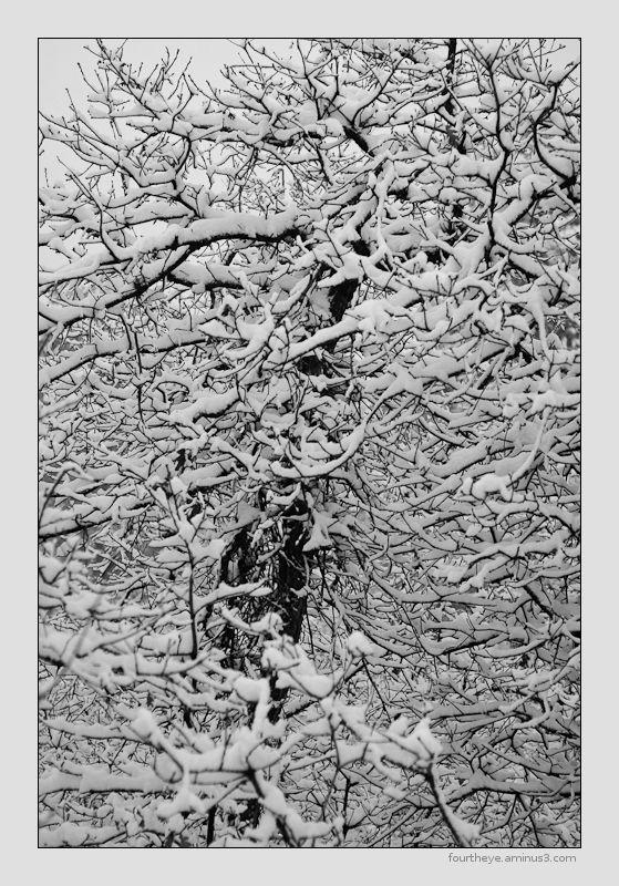 snow tree abstract