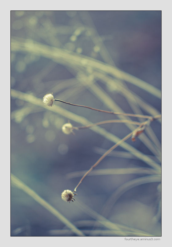 abstract grass image